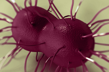 World Health Organisation's new warning : Gonorrhea becoming more resistant to antibiotics